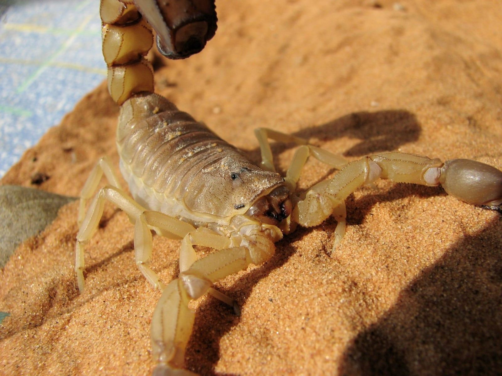 The night I thought I was going to die from a Scorpion sting in Guatemala