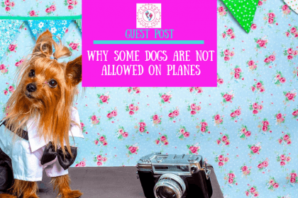 Guest Post _ Why Some Dogs Are Not Allowed on Planes by Sarah Jones