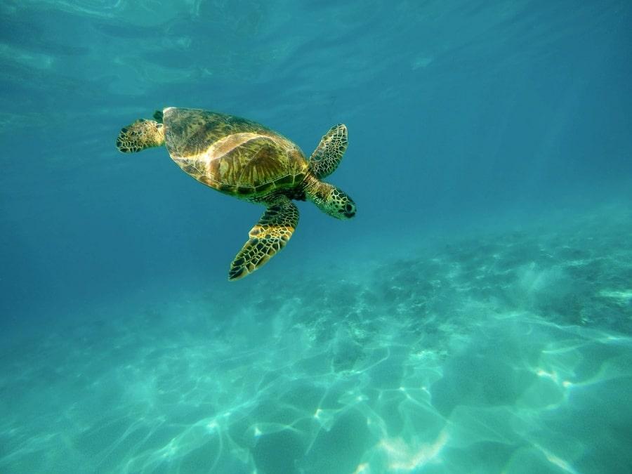 Mexico Travel Guide| Akumal Glamping | Glamping in the Riviera Maya