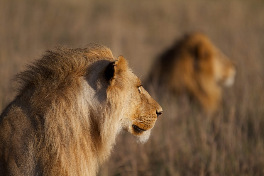 African Adventures | Your time to go on a dream safari in Tanzania