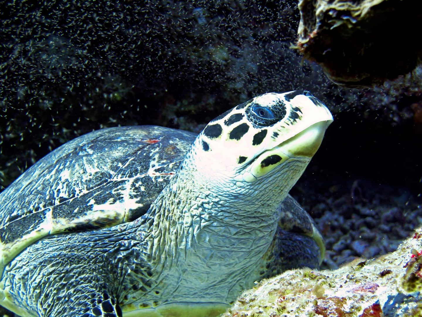 The Ultimate Guide to Diving in Cozumel   Cozumel dive sites, companies & accommodation