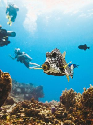 24 reasons to scuba dive in Cozumel