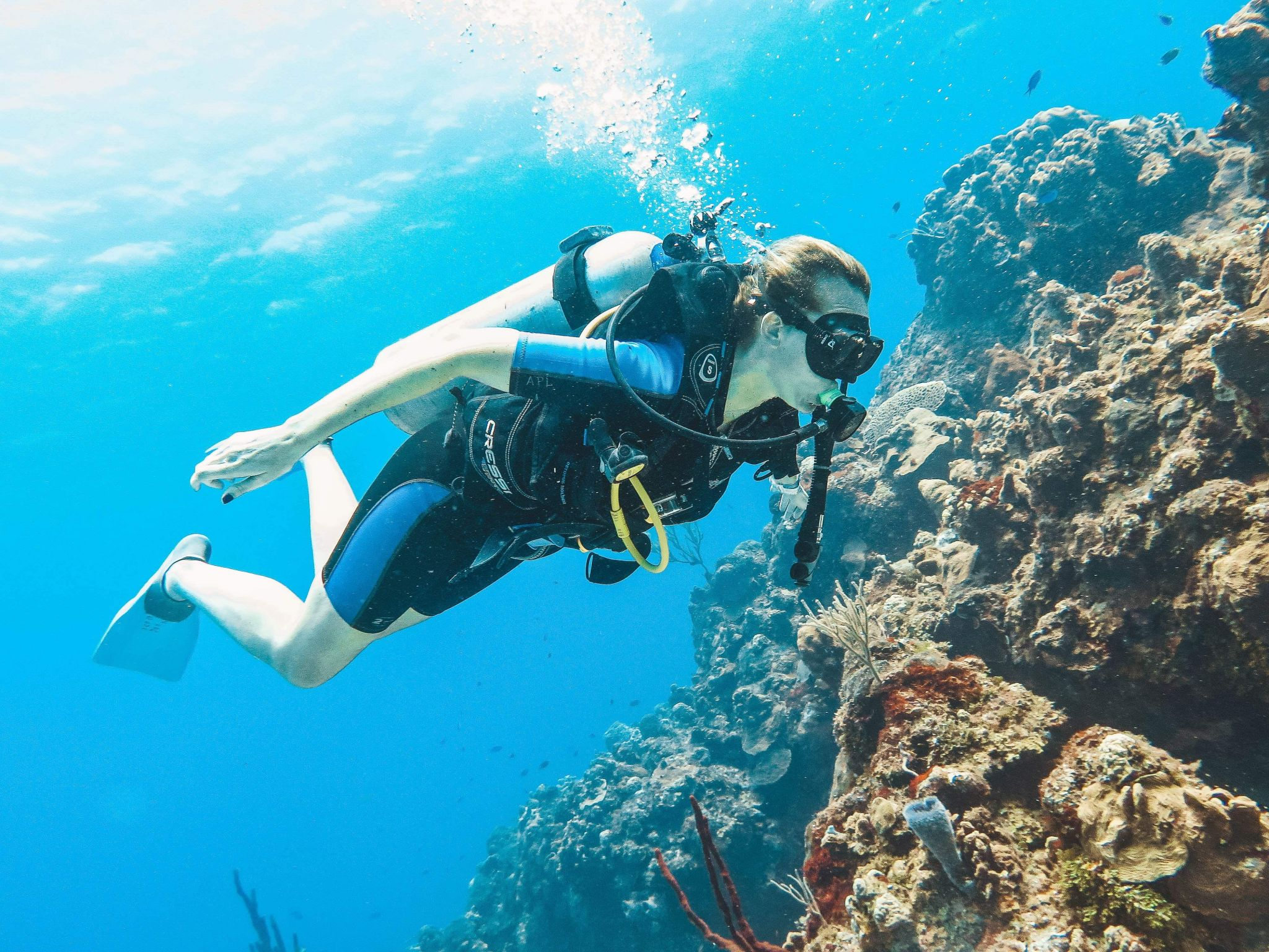 The Ultimate Guide to Diving in Cozumel | Cozumel dive sites, companies & accommodation