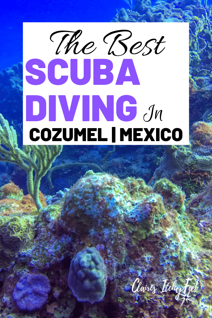 Looking for the best diving in Cozumel Mexico? Cozumel Mexico had world class diving and with so many companies to choose from it can be hard finding the best diving in Cozumel. Take a read of my experience scuba diving in Cozumel Mexico. #scubadiving #divingmexico #scubaDive #cozumelmexico