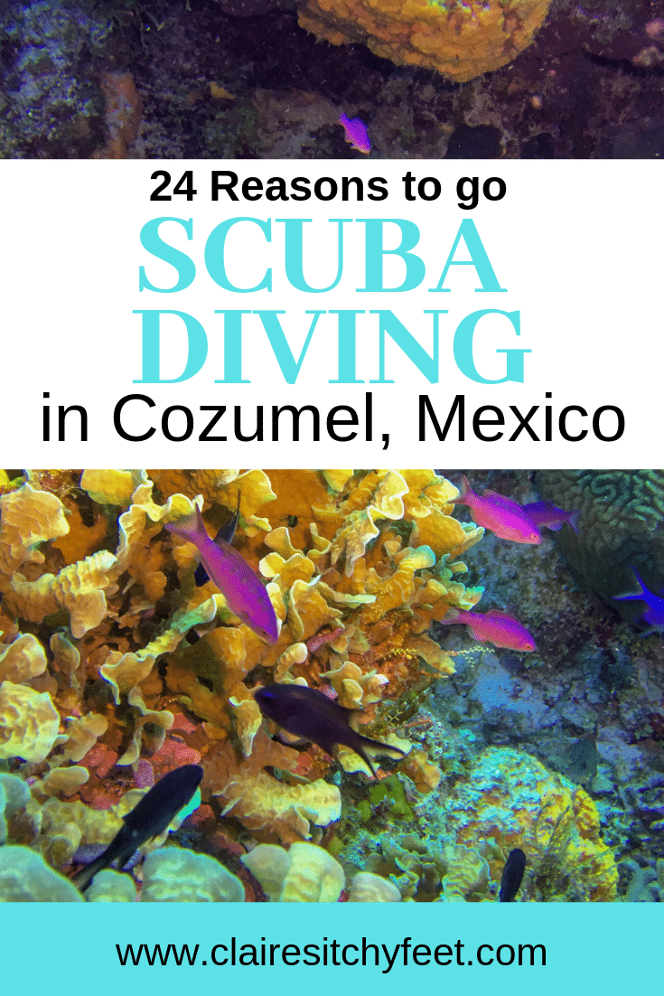 Looking for your next Scuba Diving destination? Cozumel in Mexico is one of the top dive destinations in the world. Scuba diving in Cozumel is world class. In this post I share 24 reasons why you NEED to go diving in Cozumel Mexico in the Riviera Maya. #ScubaDiving #DivingVacations #ScubaDive #DivingVacation #BestPlacesToDive