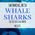Whale shark tours Playa del Carmen | Everything you need to know