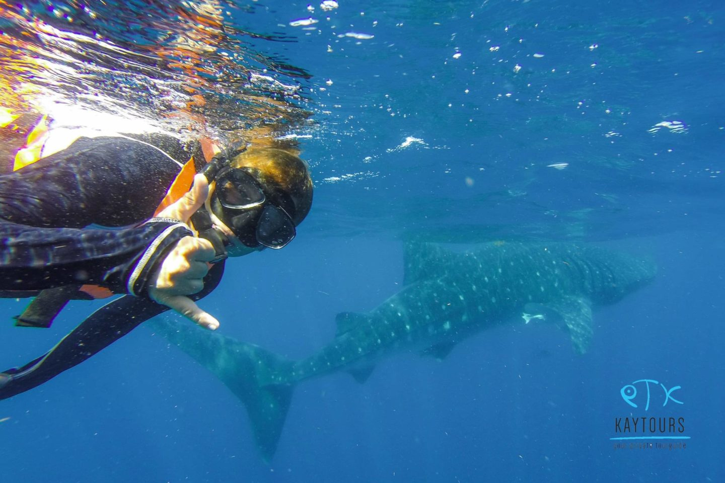 Swimming with whale sharks Playa del carmen
