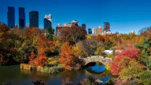 Visiting NYC | Finding Nature in the Concrete Jungle