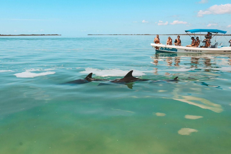 sian ka an dolphins
