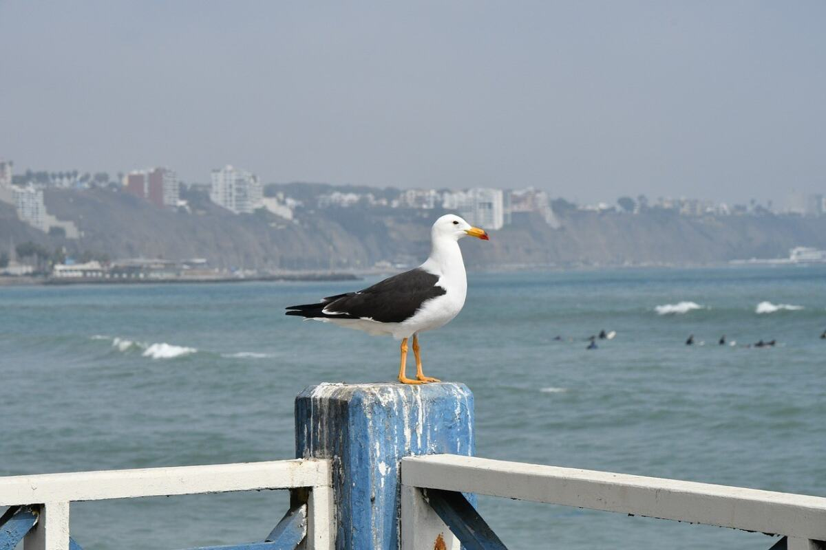 places to visit in lima peru