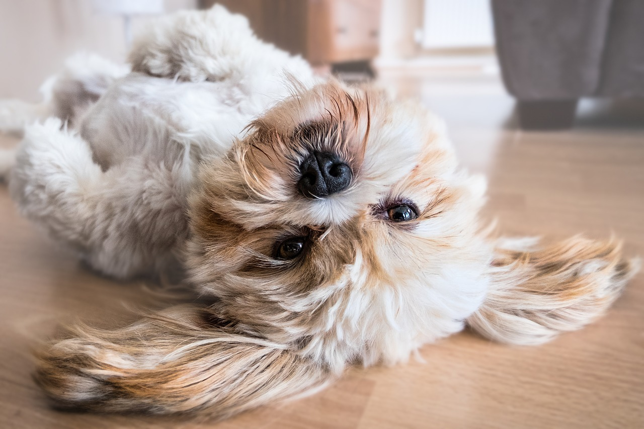 How To Save Money By Becoming House And Pet Sitters