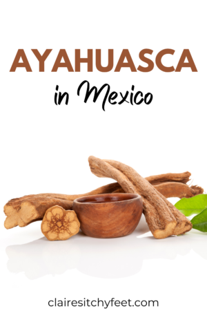 My Personal Journey With Ayahuasca Mexico