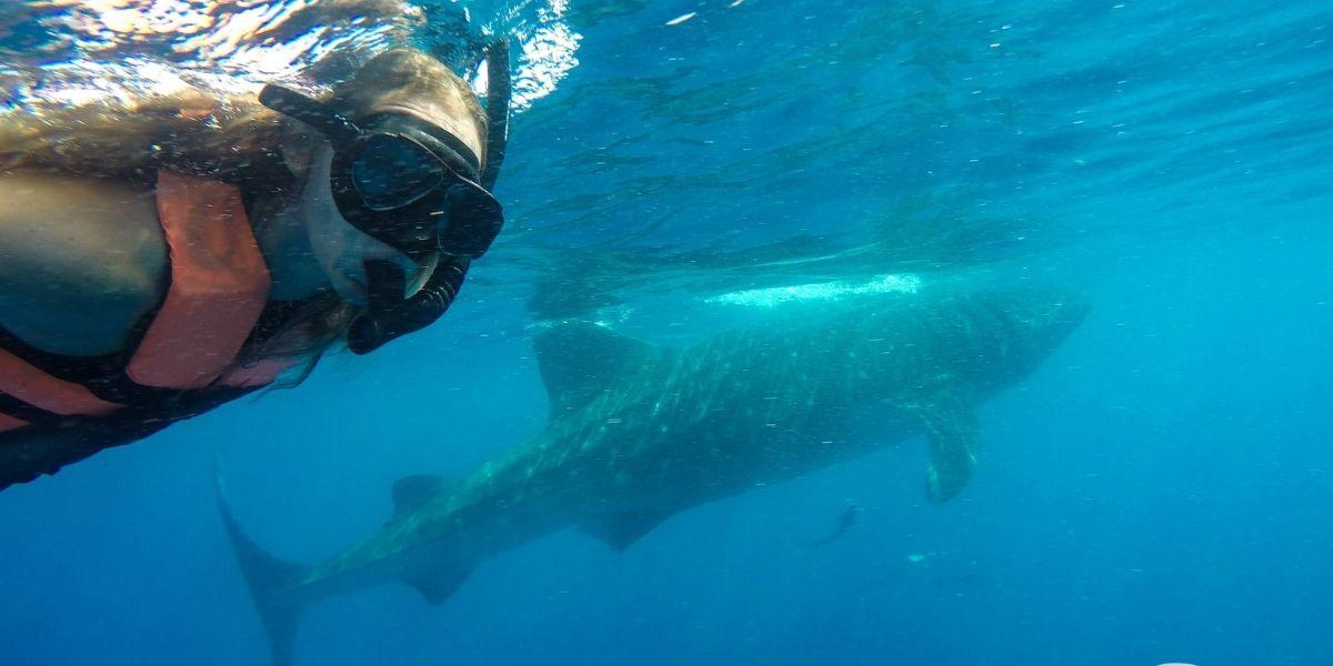 Whale Shark Tour Playa Del Carmen