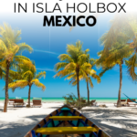 Things To Do In Isla Holbox For Nature Lovers
