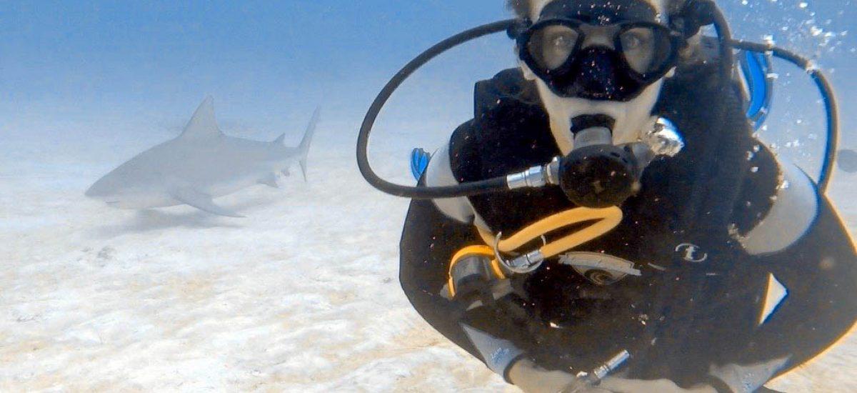 diving with bull sharks in Playa del carmen